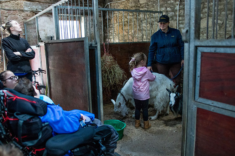 Young girl playing with 2 goats as 2 children in wheelchairs watch